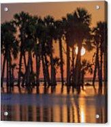 Illuminated Palm Trees Acrylic Print