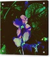 Illuminated Wildflowers Acrylic Print