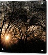 Illuminating Through Trees  Acrylic Print