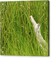 Illusions In The Grass Acrylic Print