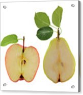 Illustration Of Apple And Pear Acrylic Print