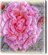 Illustration Rose Pink Acrylic Print