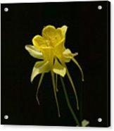 Ilumination Acrylic Print