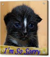 I'm So Sorry Greeting Card Acrylic Print