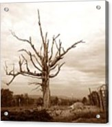 Fantastic Tree Acrylic Print