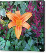Image Included In Queen The Novel - Late Summer Blooming In Vermont 23of74 Enhanced Acrylic Print