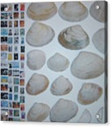 Images and shells Acrylic Print