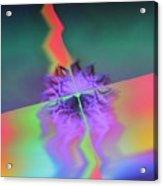 Img0028 Acrylic Print