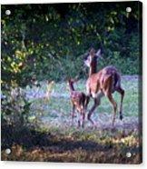 Img_0461-020 - White-tail Deer Acrylic Print