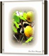 Img_0899-005-ttp Acrylic Print