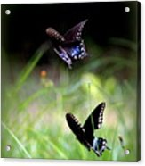Img_1521 - Butterfly Acrylic Print
