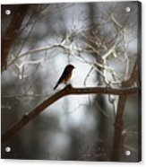 Img_2287 - Eastern Bluebird Acrylic Print