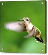 Img_7512 - Ruby-throated Hummingbird Acrylic Print