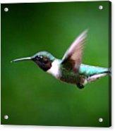 Img_7668-003 - Ruby-throated Hummingbird Acrylic Print