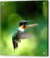Img_9985-001 - Ruby-throated Hummingbird Acrylic Print