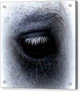 Img_9999 - Horse Acrylic Print