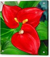 Immeasurable Beauty- Anthurium Paintings Acrylic Print