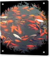 Imperial Koi Pond With Black Swirling Frame Acrylic Print