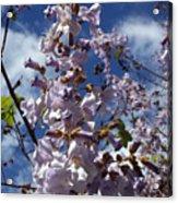 Imperial Tree Flowers Acrylic Print
