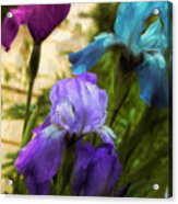 Impossible Irises Acrylic Print