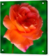 Impossible Rose Acrylic Print