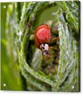 Imposter Ladybug Acrylic Print