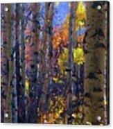 Impression Of Fall Aspens Acrylic Print