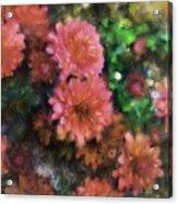 Bronze And Pink Mums Acrylic Print