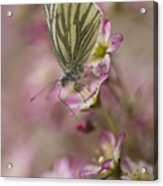 Impression With A Small Butterfly Acrylic Print