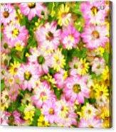 Impressionist Floral Ix Acrylic Print