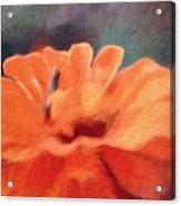 Impressionist Painting Of An Orange Mum Acrylic Print