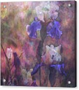 Impressionist Purple And White Irises 6647 Idp_2 Acrylic Print