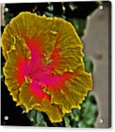 Impressionistic Hibiscus Yellow And Red  Acrylic Print