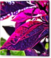 Impressionistic Purple Leaves Acrylic Print