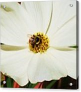 In A Bee's Life Acrylic Print