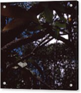 In A Brazilian Forest Acrylic Print