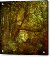 In A Forest Acrylic Print