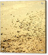 In A Golden Morning Acrylic Print