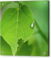 In A  Green World  Acrylic Print