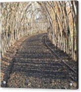 In A Haystack Acrylic Print