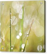 In A Meadow Acrylic Print