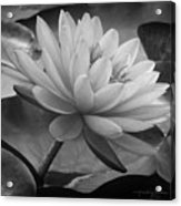 In A Mermaid's Garden - Monochrome Version Acrylic Print