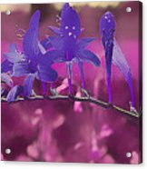 In A Pink World Acrylic Print