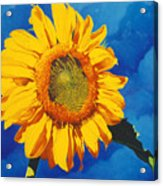 In All Its Glory Acrylic Print