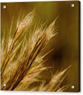 In An Autumn Field - Golden Macro Acrylic Print