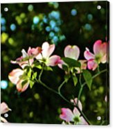 In Another Spring 2013 002 Acrylic Print