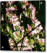 In Another Spring 2013 005 Acrylic Print