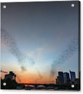 In Austin Streams Of Mexican Freetailed Bats The Worlds Largest Urban Bat Colony Take To The Skies During Sunset Acrylic Print