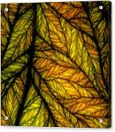 In Autmn's Sunset Acrylic Print