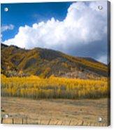In Autumn Light Acrylic Print